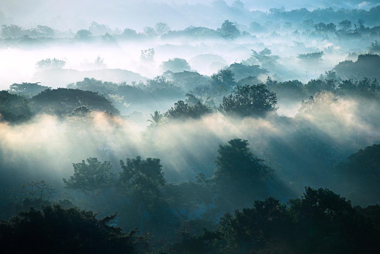 Landschaft mit Bäumen und Morgennebel