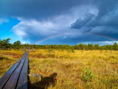 Im lettischen Nationalpark Ķemeri. Foto: © Thimo L. Limpert.