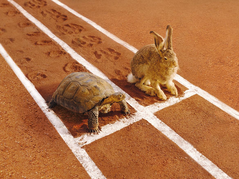 Ein Hase und eine Schildkröte warten auf einer Laufbahn auf den Startschuss für ein Wettrennen. Bild: © GK Hart/ Vikki Hart / Getty Images
